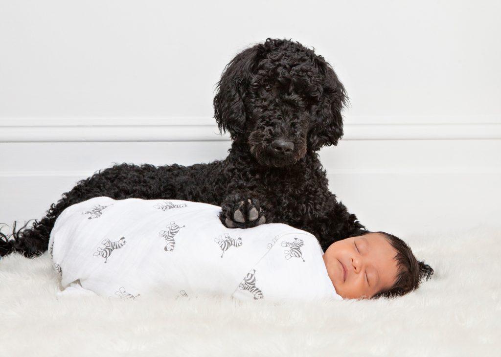 Newborn and Dog Newborn Photography Melbourne